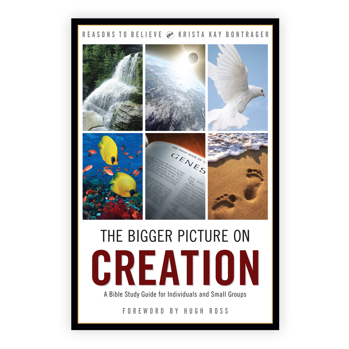 The Bigger Picture on Creation Study Guide Image